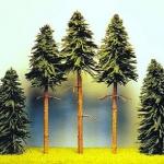 DrzewkaI1